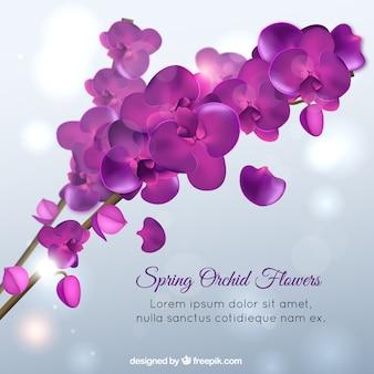 Spring orchid flowers, violet color