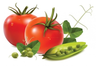 Stock tomatoes nuts garlic vegetables .vector