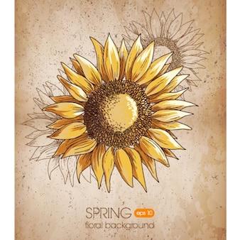 Sunflower hand drawn grunge background