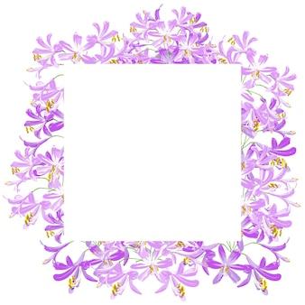 The agapanthus flower for frame.