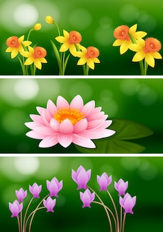 Three scenes with three different flowers