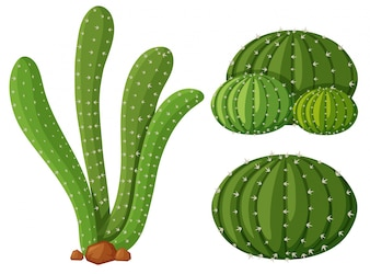 Three types of cactus plants illustration