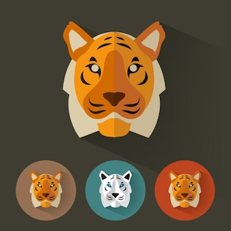 Tiger designs collection