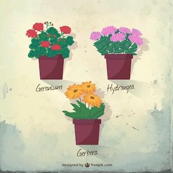 Traditional flowerpots