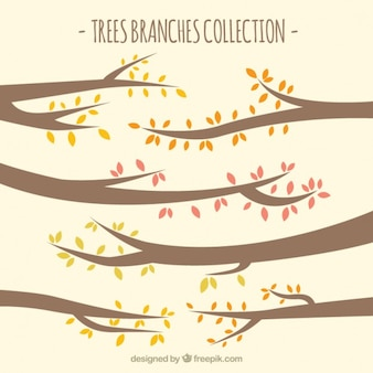 Tree branches collection