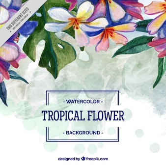 Tropical background in watercolor effect