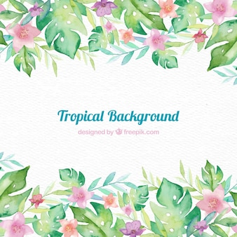Tropical frame background