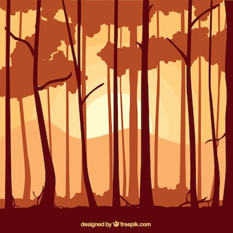 Trunks of tree silhouettes background in orange tone