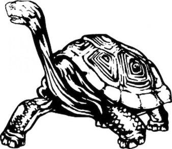 Turtle reptile animal
