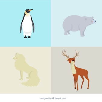 Variety of arctic animals