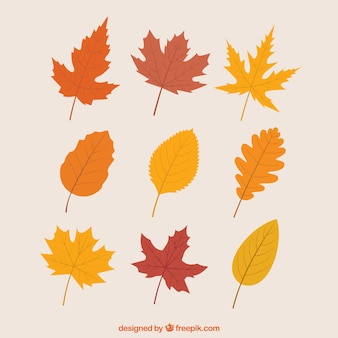 Variety of autumnal leaves
