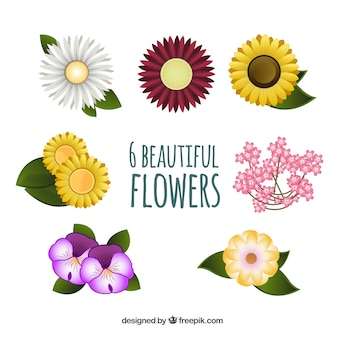 Variety of beautiful flowers