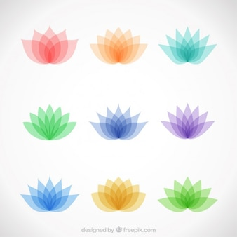 Variety of colorful lotus flowers