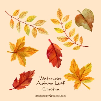 Variety of dry leaves in watercolor effect