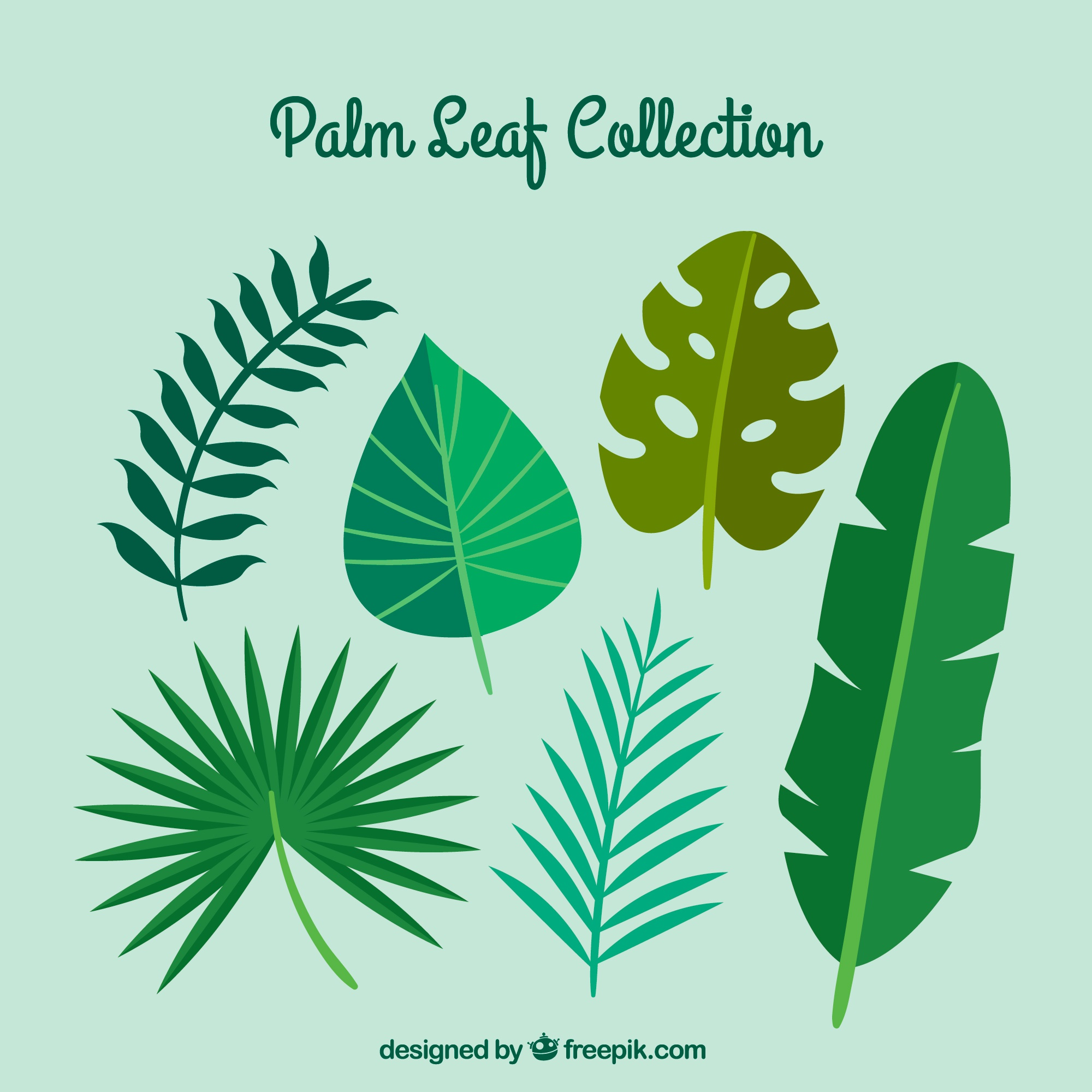 Variety of flat palm leaves