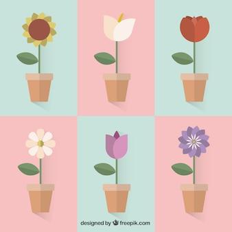 Variety of flower pots