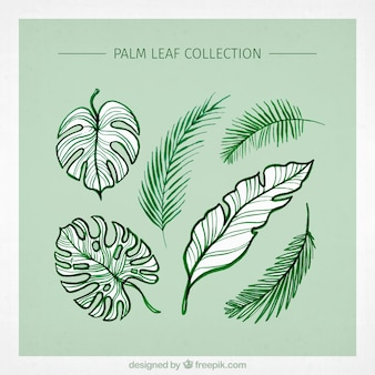 Variety of green palm leaves