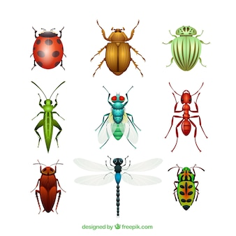 Variety of insects