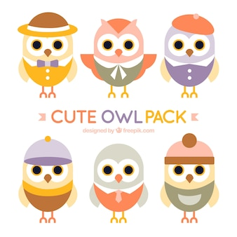 Variety of lovely owls with accessories