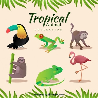 Variety of tropical animals