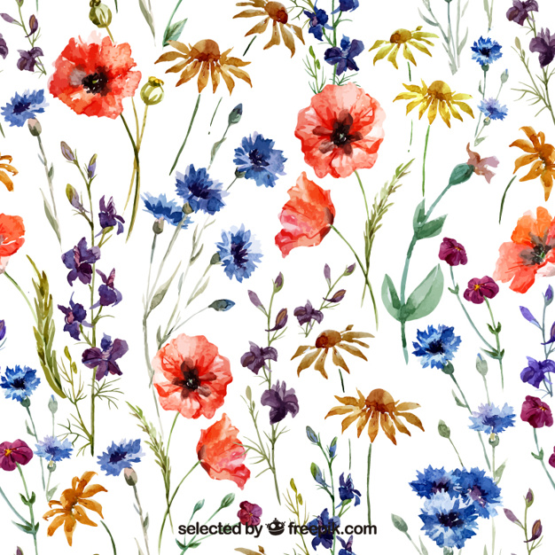 Variety of watercolor flowers