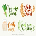 Variety of watercolor organic food stickers