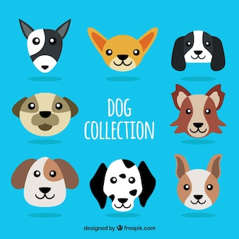 Various dogs in flat design