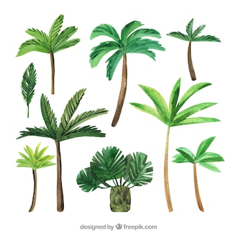 Various watercolor palms