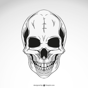 Vector skull template drawing