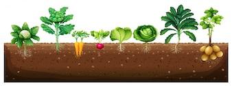 地下のイラストから生える野菜