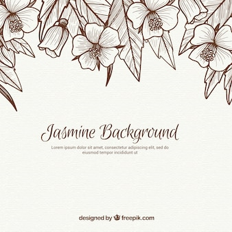 Vintage background of jasmine and leaves sketches
