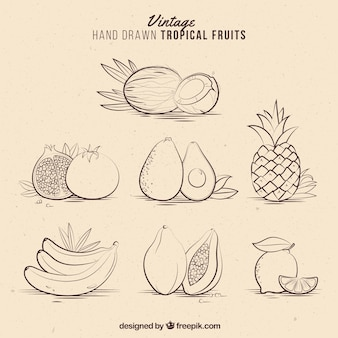 Vintage hand drawn tropical fruits