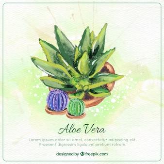 Watercolor aloe vera pot and cactuses