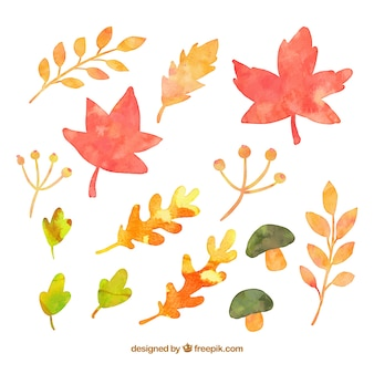 Watercolor autumnal leaves