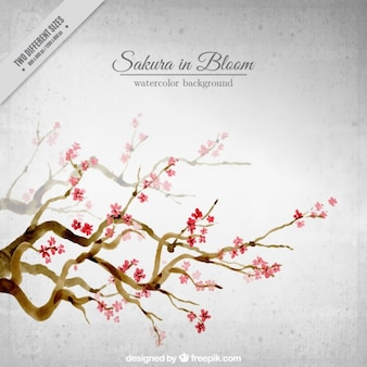 Watercolor beautiful cherry trees background