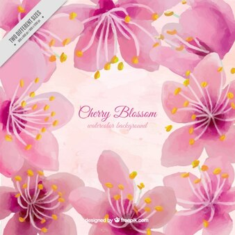 Watercolor big cherry blossom background