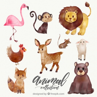 Watercolor collection of wild animals