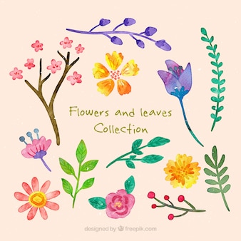 Watercolor cute flowers and leaves collection