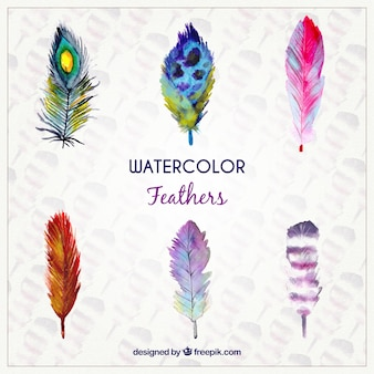 Watercolor feathers in colored style