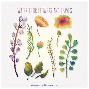 Акварельные цветы и листья