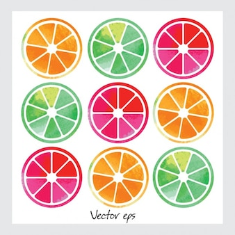 Watercolor fruit slices