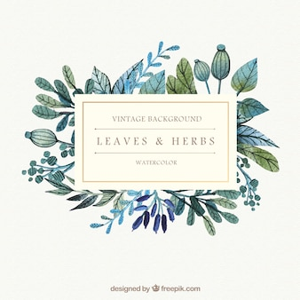 Watercolor leaves and herbs background