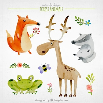 Watercolor nice forest animals