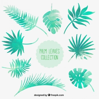 Watercolor palm leaves collection