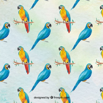 Parrot Vectors Photos And Psd Files Free Download