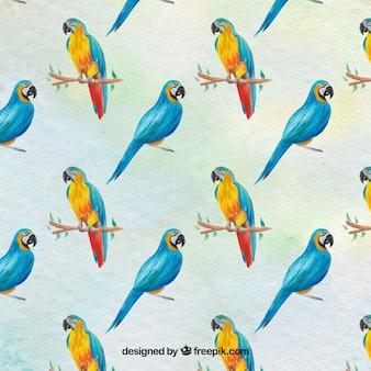 Watercolor parrots background