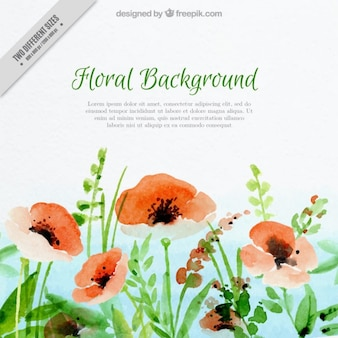 Watercolor poppies background
