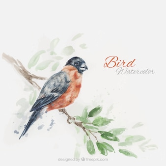 Watercolor realistic bird on a branch background