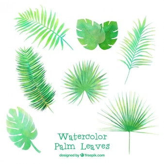 Watercolor several palm leaves