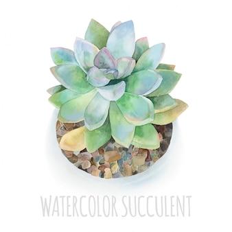 Watercolor succulent modern illustration